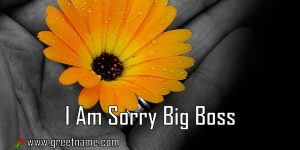 I Am Sorry Big Boss Flower In Hand