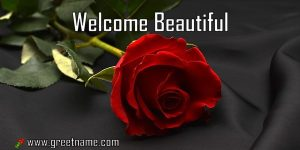 Welcome Beautiful Rose Flower