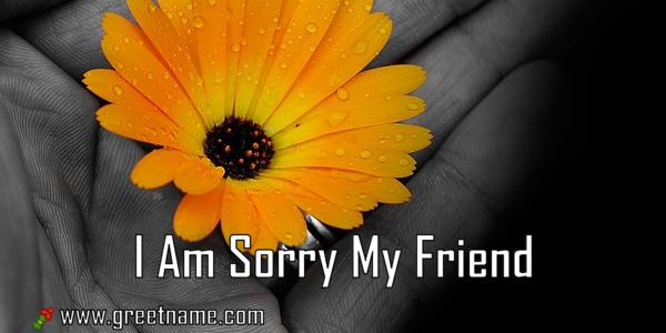 I Am Sorry My Friend Flower In Hand - Greet Name