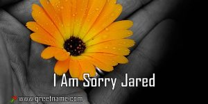 I Am Sorry Jared Flower In Hand